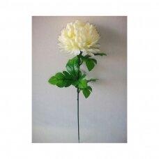 Chrizantema  karališka gelsva 55cm