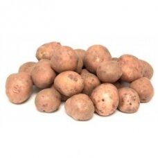 Vidutinio ankstyvumo sėklinės bulvės LAURA 5kg